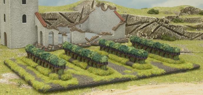 Italian Vineyards (BB116)
